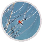 Winter Cardinal  Round Beach Towel