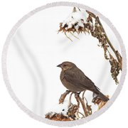 Winter Cowbird On Sunflower Round Beach Towel