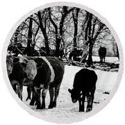 Winter Cows Round Beach Towel by Elaine Hunter