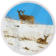 Round Beach Towel featuring the photograph Winter Deer by Mike Dawson