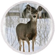 Winter Deer On The Tree Farm Round Beach Towel