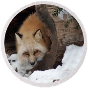 Winter Fox Round Beach Towel by Richard Bryce and Family