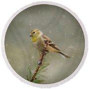 Winter Goldfinch Round Beach Towel