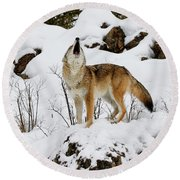 Round Beach Towel featuring the photograph Winter Howl by Steve McKinzie