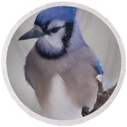 Winter Jay Round Beach Towel by Lana Trussell