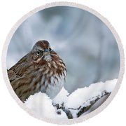 Winter Song Sparrow - 365-301 Round Beach Towel