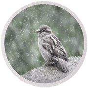 Winter Sparrow Round Beach Towel