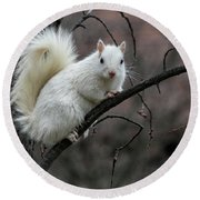 Round Beach Towel featuring the photograph Winter Squirrel by William Selander