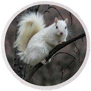 Winter Squirrel Round Beach Towel