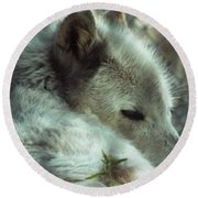 Wolf At Rest Round Beach Towel