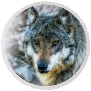 Wolf Gaze Round Beach Towel by Elaine Malott