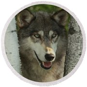Wolf In The Birch Trees Round Beach Towel