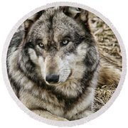 Wolf Portrait Round Beach Towel