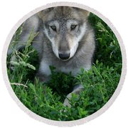 Wolf Pup Portrait Round Beach Towel