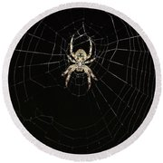 Round Beach Towel featuring the photograph Wolf Spider And Web by Mark McReynolds