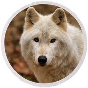 Wolf Watching Round Beach Towel