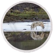 Wolflection Round Beach Towel by Steve Stuller