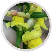 Wonderful Nature - Yellow Antirrhinum Round Beach Towel