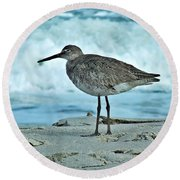Wonderful Willet  Round Beach Towel