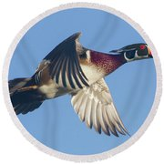 Wood Duck Flying Fast Round Beach Towel