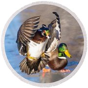 Wood Duck In Action Round Beach Towel