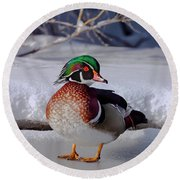 Wood Duck In Winter Snow And Ice, Montana, Usa Round Beach Towel
