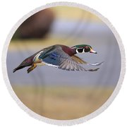 Wood Duck On The Move Round Beach Towel