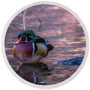 Round Beach Towel featuring the photograph Wood Duck Resting by Bryan Carter