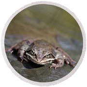 Round Beach Towel featuring the photograph Wood Frog Close Up by Christina Rollo