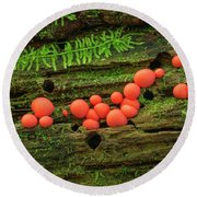 Wood Fungus Round Beach Towel