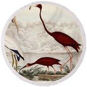 Wood Ibis, Scarlet Flamingo, White Ibis Round Beach Towel