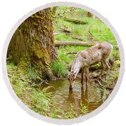 Woodland Caribou Round Beach Towel