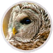 Round Beach Towel featuring the photograph Woodland Owl by Adam Olsen
