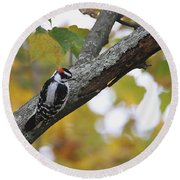 Woodpecker And Autumn Round Beach Towel