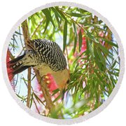 Woody In The Bottlebrush Round Beach Towel