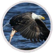 Round Beach Towel featuring the photograph Working Hard For Dinner by Coby Cooper