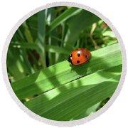 World Of Ladybug 1 Round Beach Towel