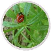 World Of Ladybug 3 Round Beach Towel
