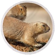 Round Beach Towel featuring the photograph Worried Prairie Dog by Robert Frederick