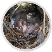 Round Beach Towel featuring the photograph Wren Babies by Angie Rea