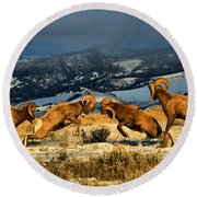 Wyoming Bighorn Brawl Round Beach Towel