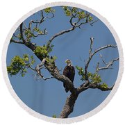Yawkey Wildlife Reguge - American Bald Eagle Round Beach Towel by Suzanne Gaff