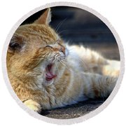 Round Beach Towel featuring the photograph Yawning by Chriss Pagani