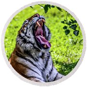Round Beach Towel featuring the photograph Yawning Tiger by Joann Copeland-Paul