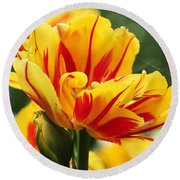Round Beach Towel featuring the photograph Yellow And Red Triumph Tulips by Rona Black