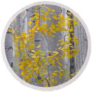 Yellow Aspen Tree Round Beach Towel