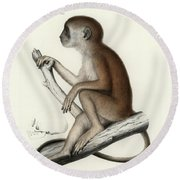 Yellow Baboon, Papio Cynocephalus Round Beach Towel