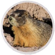 Yellow-bellied Marmot - Capitol Reef National Park Round Beach Towel