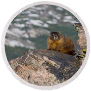 Yellow Bellied Marmot Round Beach Towel