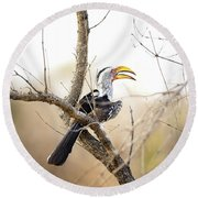 Yellow-billed Hornbill Sitting In A Tree.  Round Beach Towel by Jane Rix